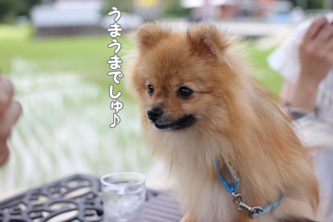 IMG_6481-20120619.jpg