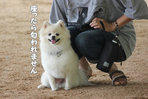 IMG_6623-20120624.jpg