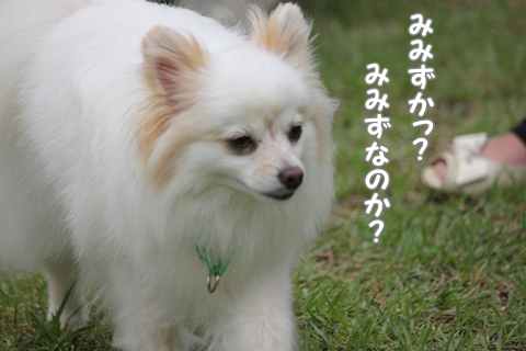 IMG_6808-20120627.jpg