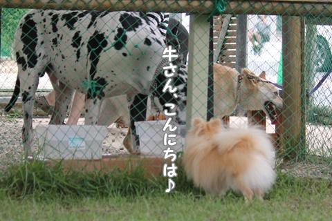 IMG_6847-20120627.jpg