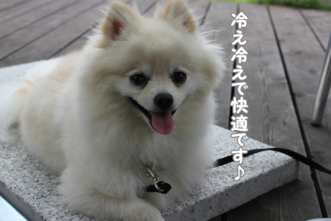 IMG_6917-20120629.jpg