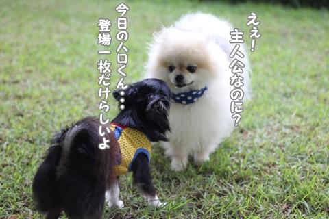 IMG_7015-20120702.jpg