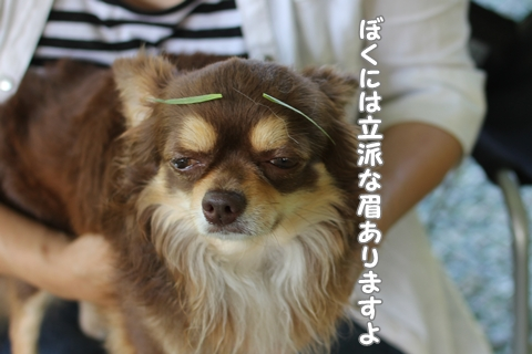 IMG_7129-20120704.jpg