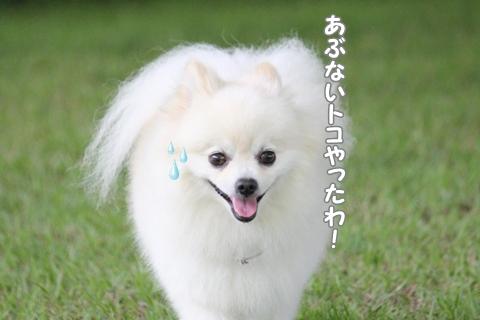 IMG_7184-20120706.jpg