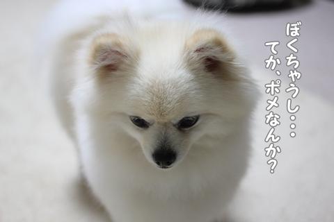 IMG_7200-20120708.jpg