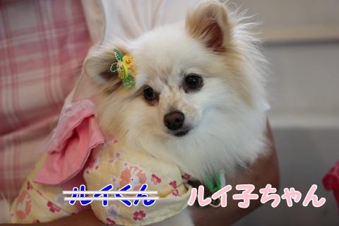 IMG_7597-20120716.jpg