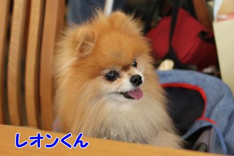 IMG_7677-20120716.jpg
