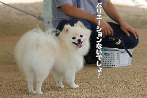 IMG_8025-20120727.jpg