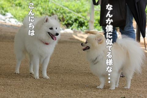 IMG_8046-20120727.jpg