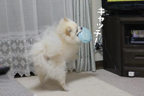 IMG_8222-20120726.jpg