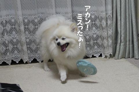 IMG_8224-20120726.jpg