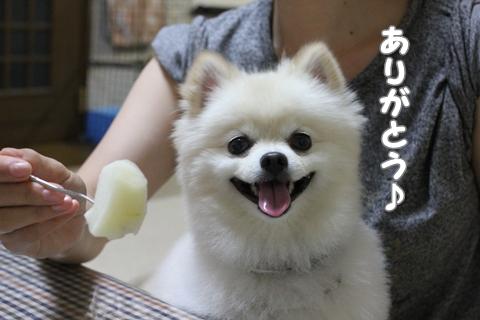 IMG_8648-20120810.jpg