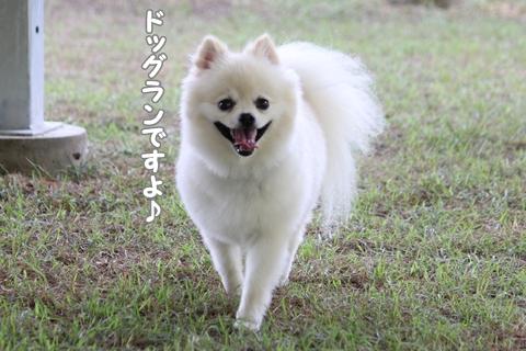 IMG_8656-20120812.jpg