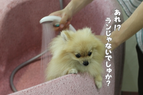 IMG_8667-20120812.jpg