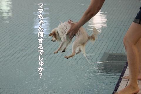 IMG_8809-20120812.jpg