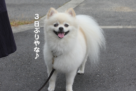 IMG_8985-20120825.jpg