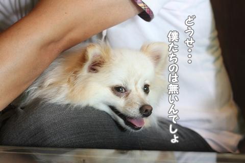 IMG_9019-20120825.jpg