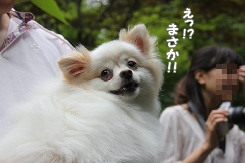 IMG_9042-20120826.jpg