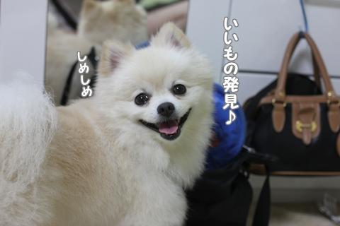 IMG_9246-20120829.jpg