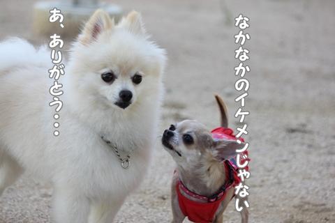 IMG_9313-20120821.jpg