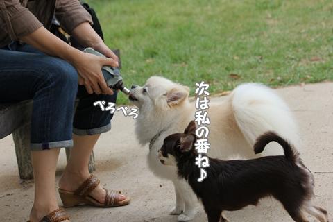 IMG_9498-20120831.jpg