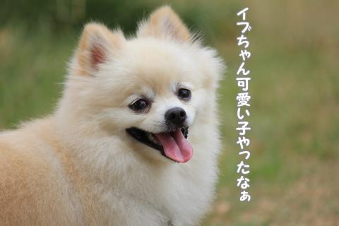 IMG_9501-20120831.jpg