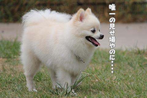 IMG_9509-20120831.jpg