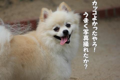 IMG_9519-20120831.jpg