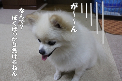 IMG_9543-20120901.jpg