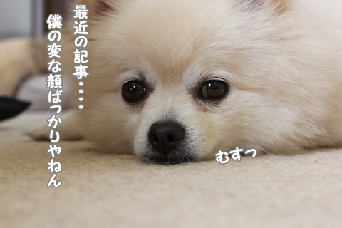 IMG_9553-20120905.jpg