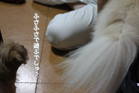IMG_9684-20120903.jpg