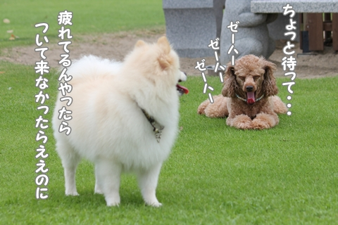 IMG_9872-20120912.jpg