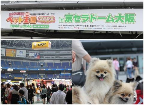 kyousera1-20120506.jpg