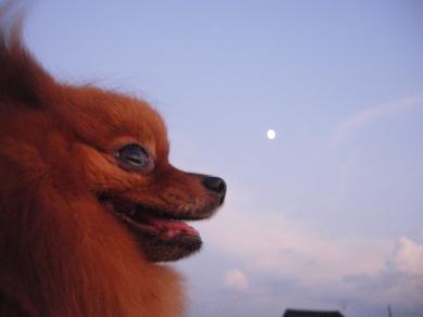 月とりおん