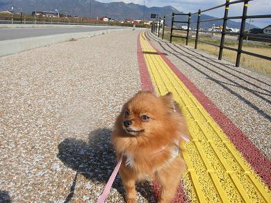 お散歩りおん