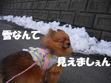 雪なんて見えましぇん