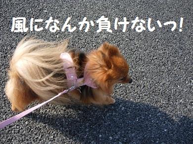 風になんか負けないっ!