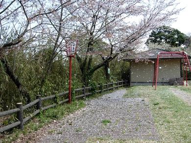 桜舞い散る愛宕山公園