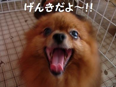 げんきだよ~!!