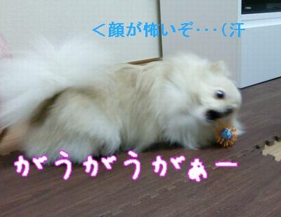 CIMG3060_20101208213141.jpg