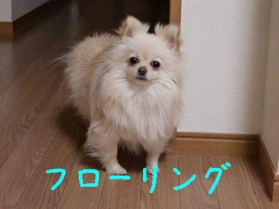 CIMG3070_20101229221015.jpg