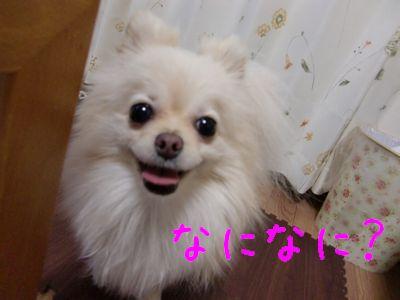 CIMG3109_20101231023625.jpg