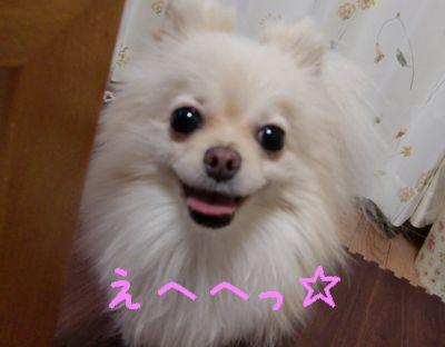 CIMG3109_20110208224855.jpg
