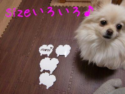 CIMG3313.jpg