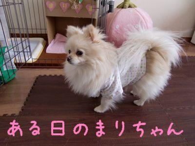 CIMG3323_20110308000629.jpg
