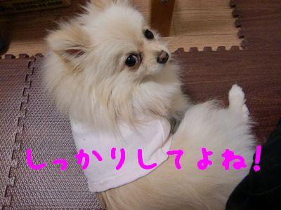 CIMG3485_20110207234651.jpg