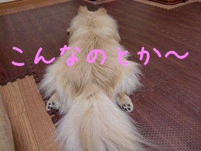 CIMG3707.jpg