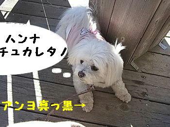 hannna_20110119232730.jpg