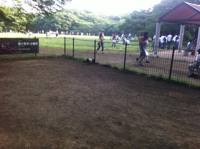 代々木公園①