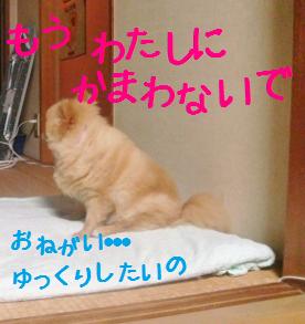 DSC01508 (500x375)